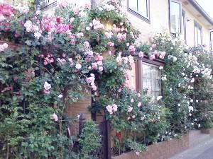 2013.5.17 薔薇の館(永福町)